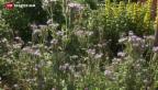 Video «Die Stadt als Paradies für Bienen» abspielen