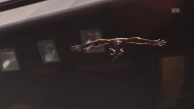 Video «Wüstenbussard Rufus sorgt in Wimbledon für Ruhe» abspielen