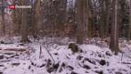 Video «In Baselbieter Wald wird Klimawandel simuliert» abspielen