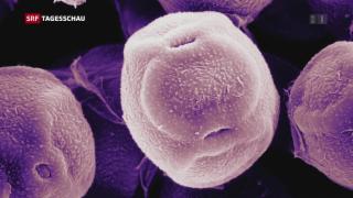 Video «Pollen im Anflug» abspielen