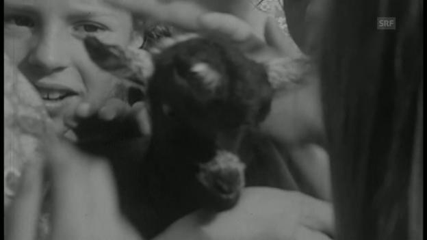 Video «Stadtkinder auf dem Bauernhof (Antenne, 28.7.1972)» abspielen