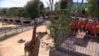 Video «Der Kinder- und Jugendchor Rosenstadt» abspielen