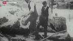 Video «Der Lachs soll den Rhein zurück erobern» abspielen