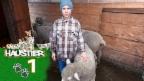 Video «Ursin und seine vier Schafe» abspielen