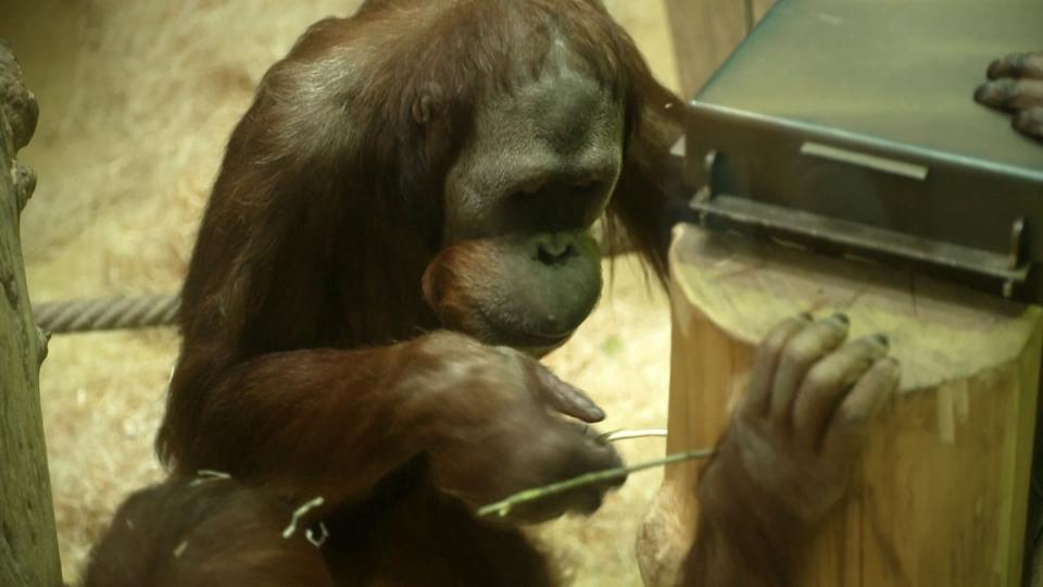 Schlaue Tiere: Intelligenter als wir meinen