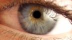 Video «Mikrowelt: Die Wimper» abspielen