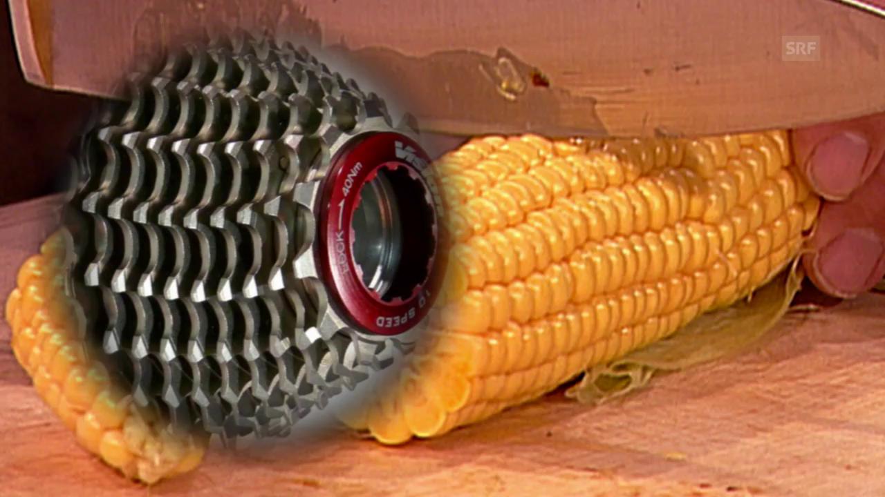 Der Maiskolben