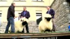 Video «Sepplis Kampf um den Podestplatz» abspielen