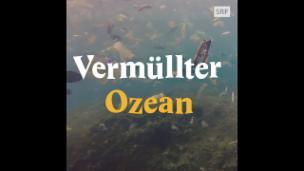 Video «Ein Meer von Mikroplastik» abspielen