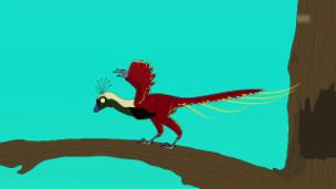 Video «Der frühe Vogel - Xiaotingia» abspielen