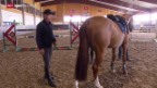 Video «Pferdehandel – die Basis für erfolgreichen Springsport» abspielen