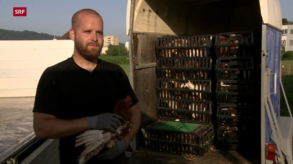 Tobias Lüscher, Eierproduzent Wettingen: «Hauptgrund der Schlachtung nach 12 Monaten ist die Schalenqualität.»