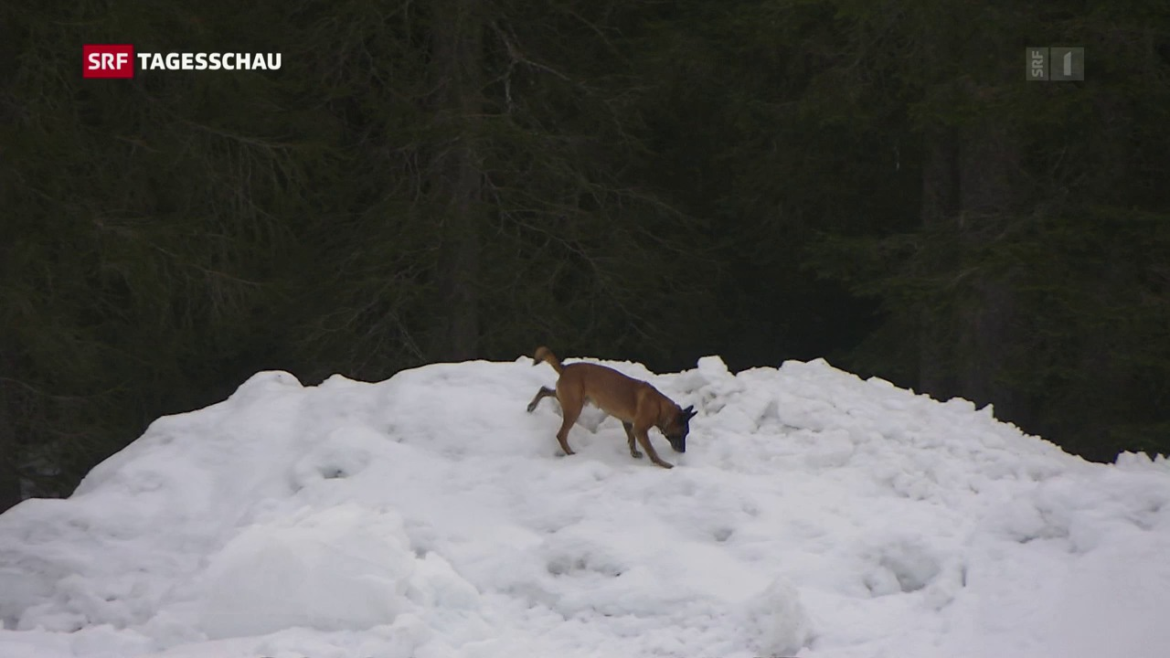 Wettkampf der Lawinenhunde