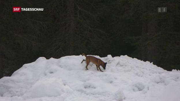 Video «Wettkampf der Lawinenhunde» abspielen