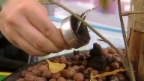 Video «Kaffeesatz als Pflanzendoping» abspielen