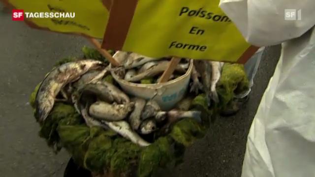 Protest-Aktion gegen Fischsterben im Doubs