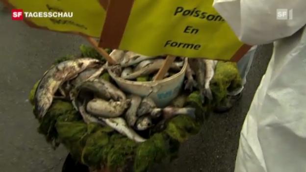Video «Protest-Aktion gegen Fischsterben im Doubs» abspielen