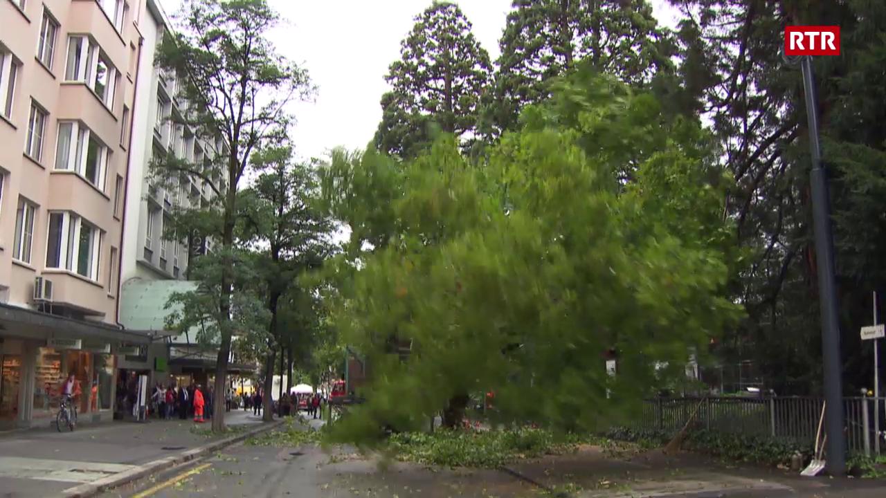 Ina da las plantas vegn derschida a la via da la staziun a Cuira.