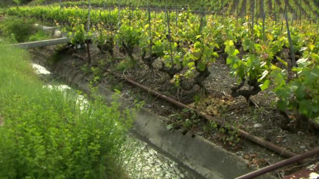 Video «Pestizide im Wasser: Behörden nehmen hohes Risiko in Kauf» abspielen