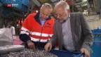 Video «KEZO Hinwil - eine Goldgrube» abspielen