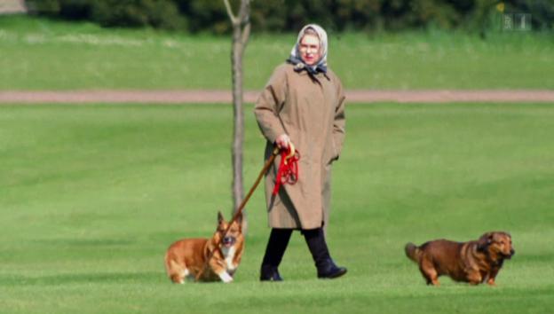 Video «Ende einer Ära: Die Queen will keine neuen Corgis» abspielen