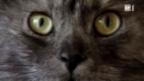 Video «Hilfe für Katzen-Allergiker» abspielen