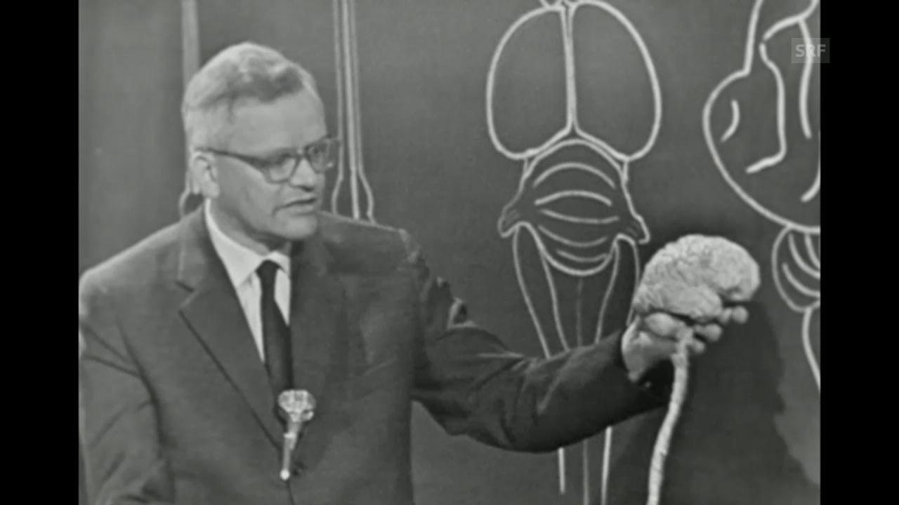 «Gian Töndury erklärt das Gehirn», 13.2.1961