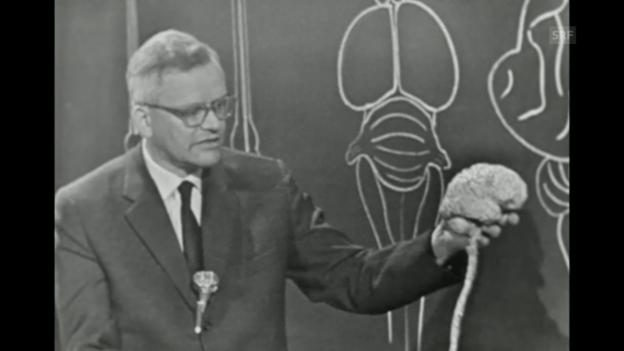 Video ««Gian Töndury erklärt das Gehirn», 13.2.1961» abspielen