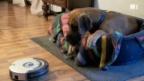Video «Staubsaug-Roboter im Test» abspielen
