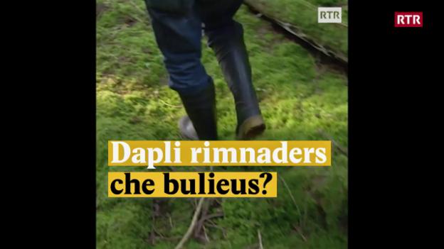 Laschar ir video «Dapli rimnaders che bulieus?»
