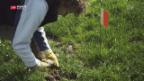 Video «Letzte Mausfängerin der Schweiz» abspielen