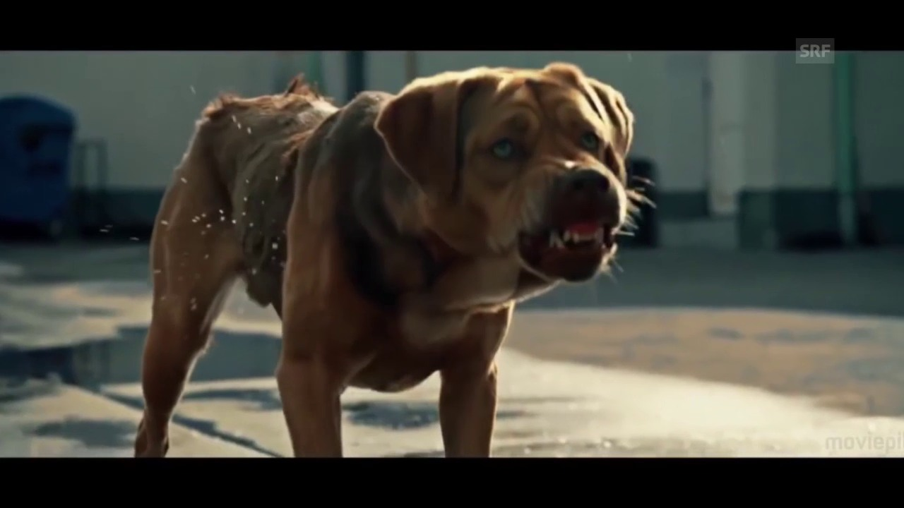 Trailer zu «White Dog»