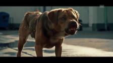 Video «Trailer zu «White Dog»» abspielen