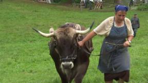 Video «Alpenfestung – Leben im Réduit (4/5)» abspielen