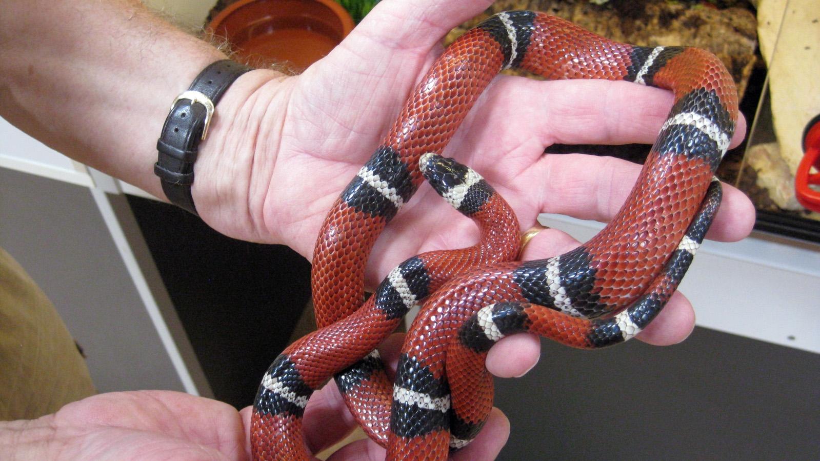 Schlangen hautnah erleben