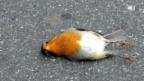 Video «Vogelkiller Glasscheibe - Millionen tote Vögel» abspielen