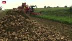 Video «Weniger Zuckerrüben in der Schweiz» abspielen