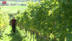 Video «Thurgauer Winzer im Hoch» abspielen