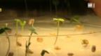 Video «Mit Dampf gegen Pilze» abspielen