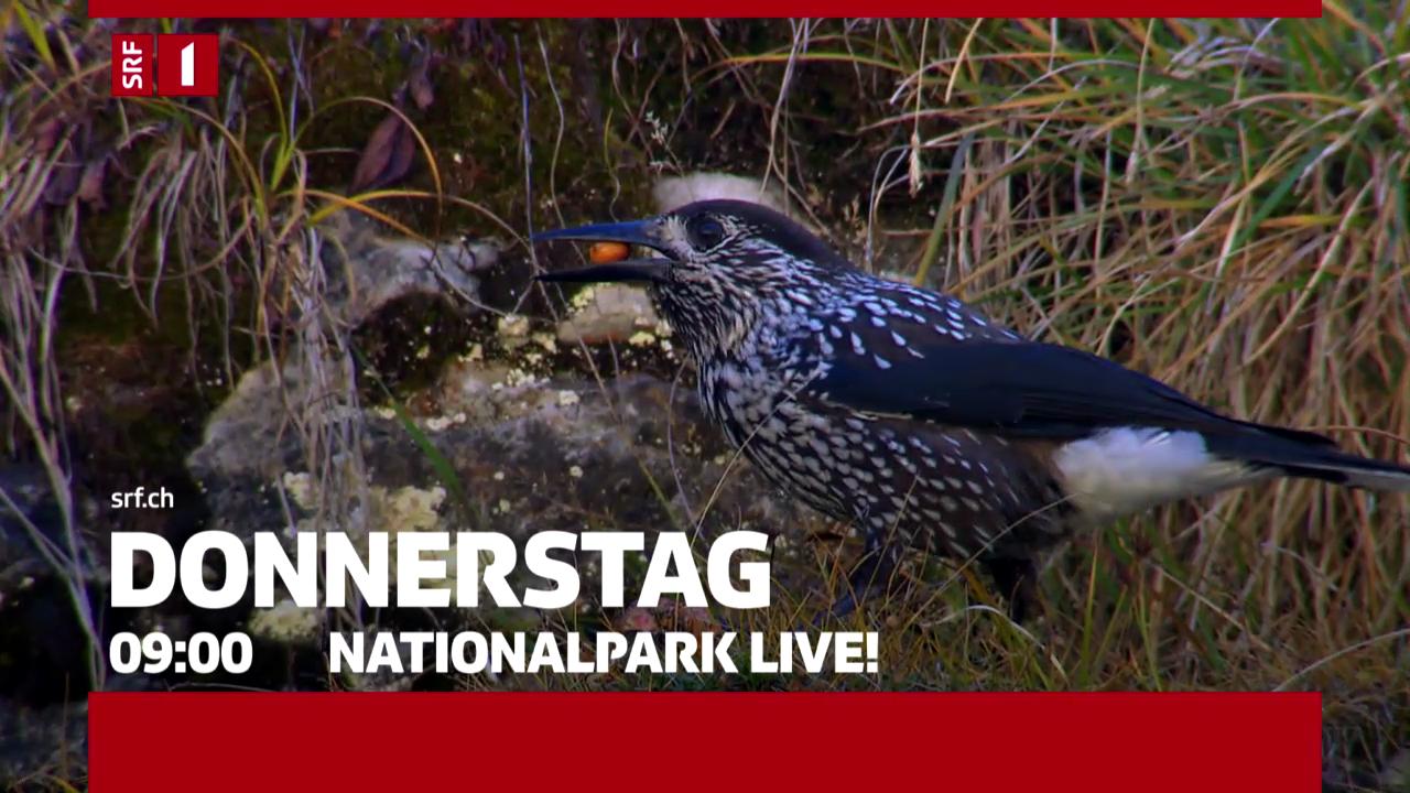 «NETZ NATUR» vom 25.09.2014: Nationalpark Live