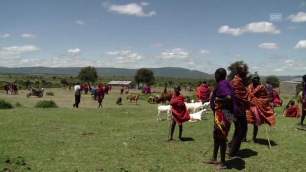 Video «Markttag - Mary kauft ein Schaf» abspielen