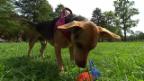 Video «Vorsicht, Hund» abspielen