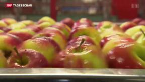 """Video «""""Apfel-Streit"""" zwischen Russland und der Schweiz» abspielen"""