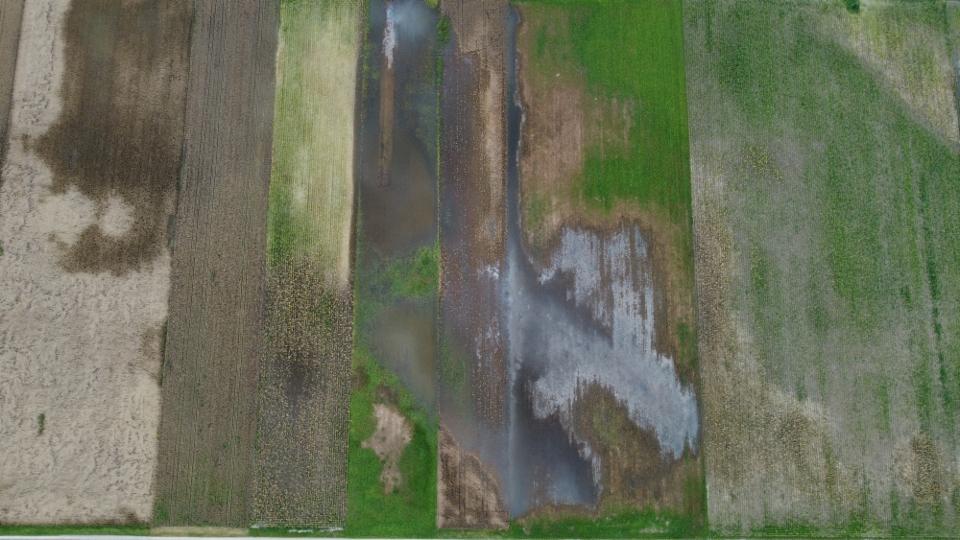 Die Felder verwandelten sich innert Wochen in ein Feuchtgebiet