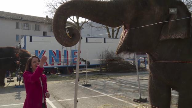Video «Making-of: Kleine und grosse Hindernisse beim Dreh mit Tieren» abspielen