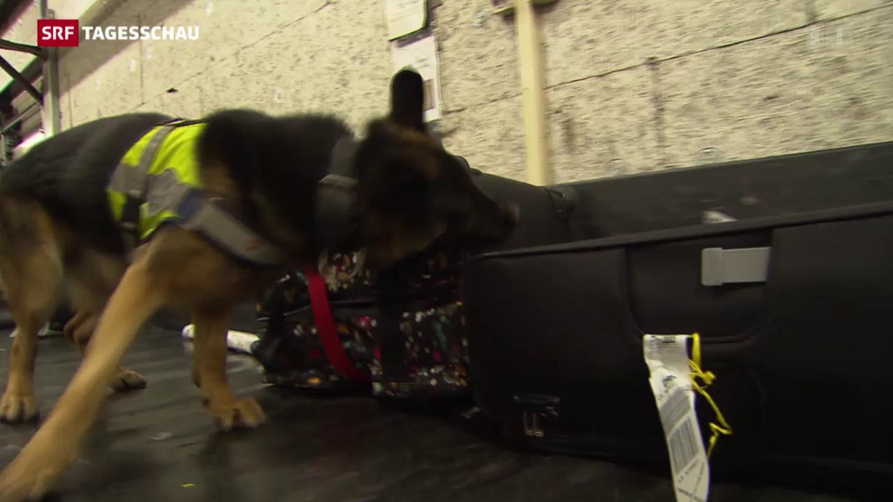 Etwas Illegales im Koffer? Diese Hunde riechen das.