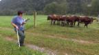Video ««SRF bi de Lüt – Landfrauenküche»: Gvätterliarbeit» abspielen