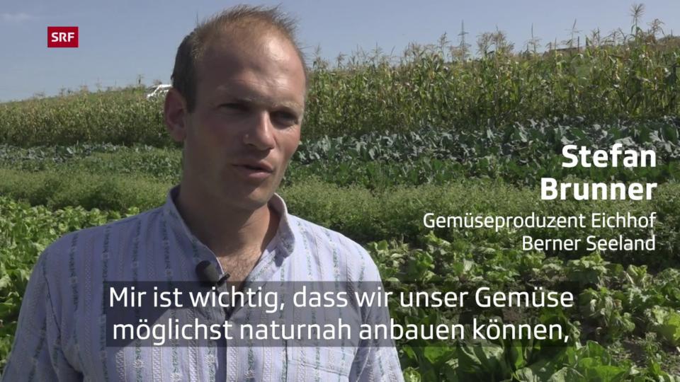Gemüseanbau ohne Pestizide
