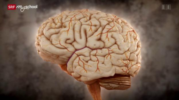 Video «Brain Games: Keine Angst! (5/12)» abspielen
