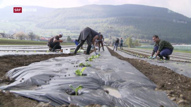 Video «Bund überweist Millionen für Arbeitslose im Ausland» abspielen